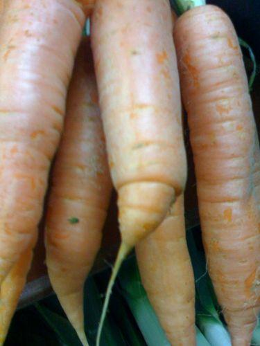 Pour les carottes bio