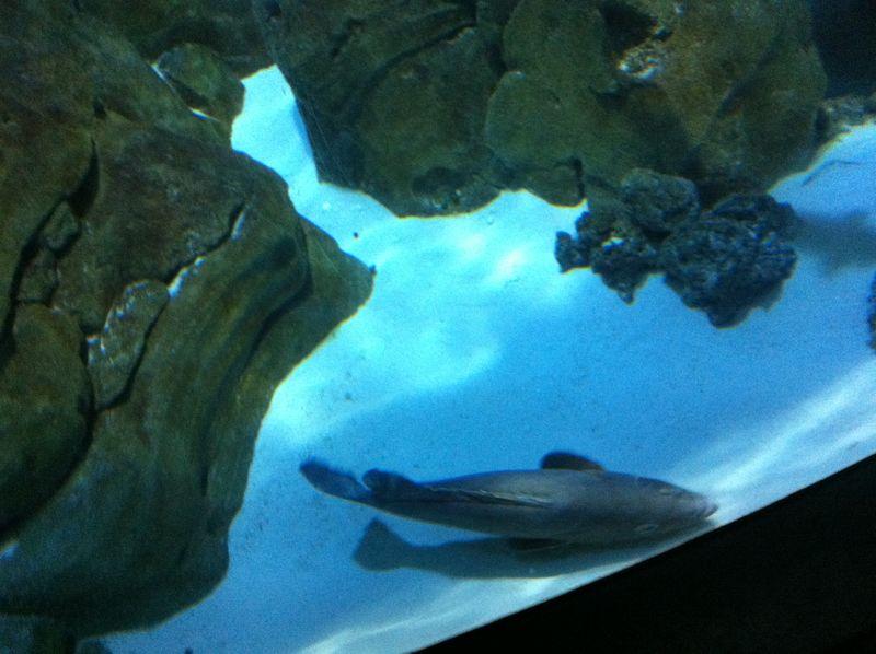 Aquarium paris 7