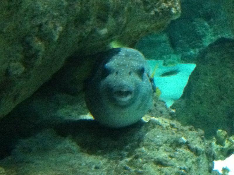 Aquarium paris 16