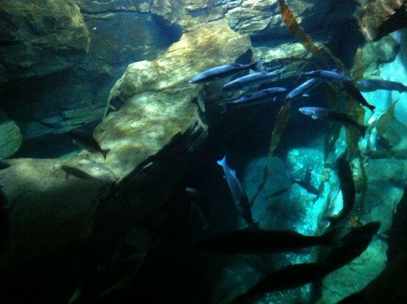 Aquariumparis 30
