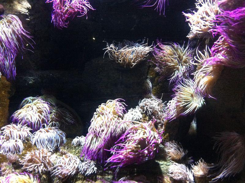 Aquarium paris 4