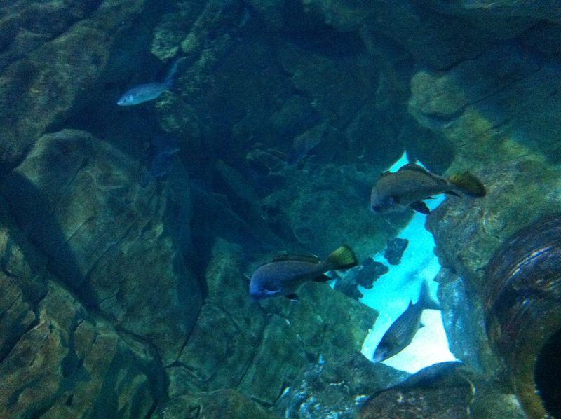 Aquarium paris 8