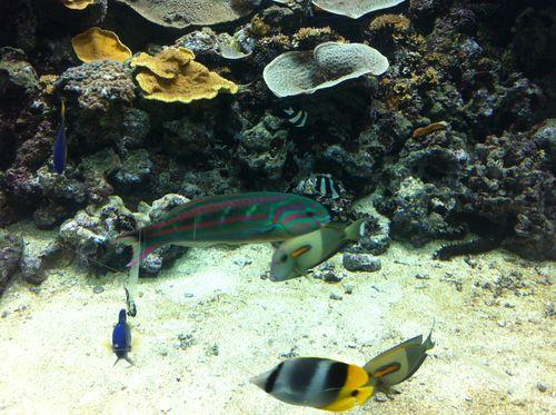 Aquarium paris 34