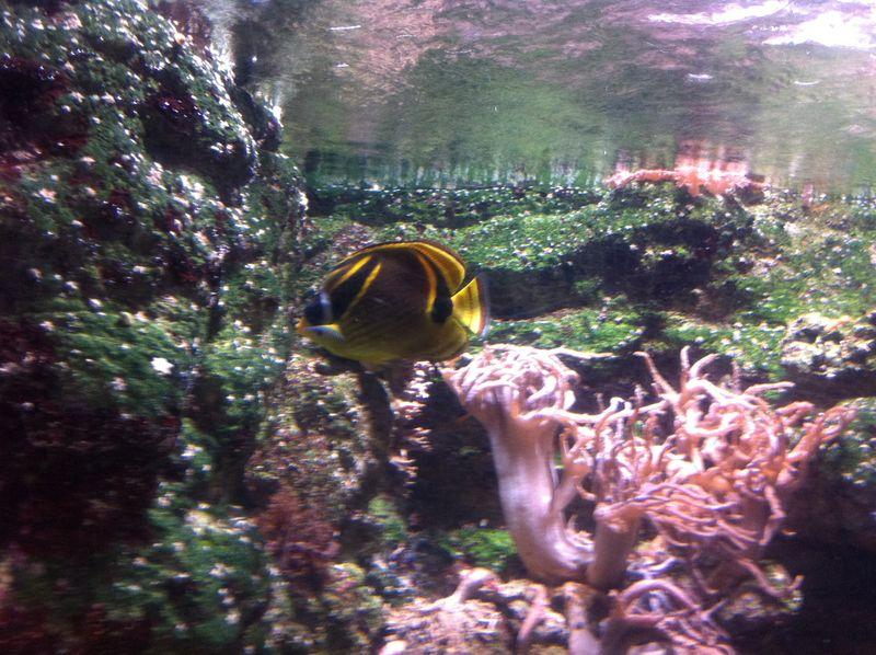Aquarium paris 21