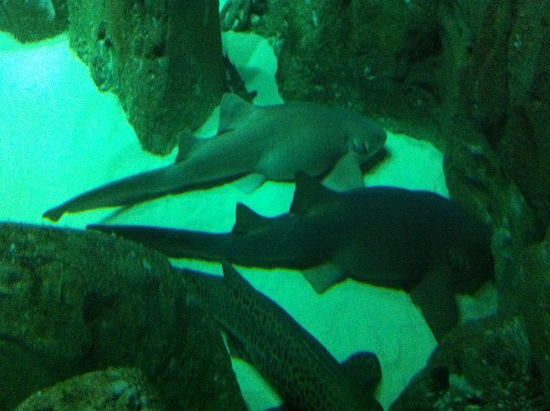 Aquarium paris 30