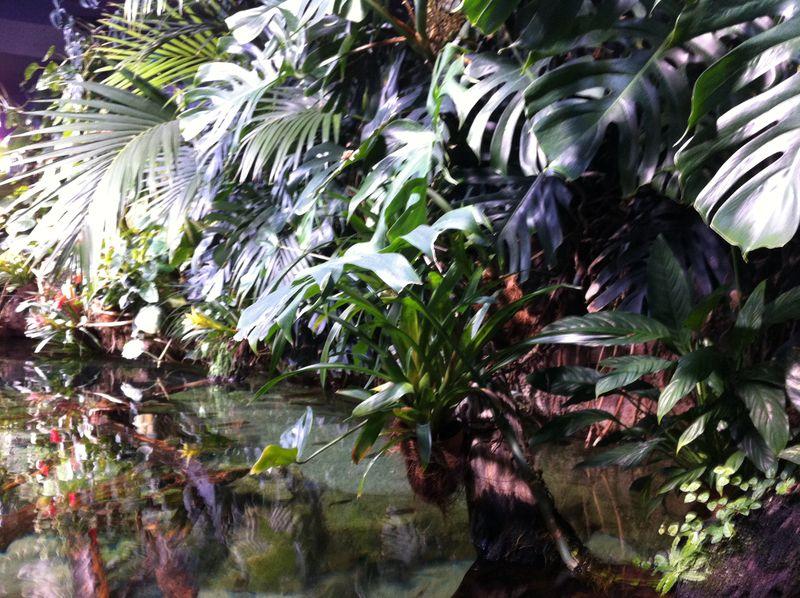 Aquarium paris 35