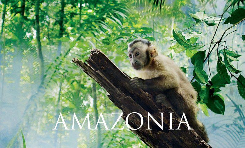 Big-cp-amazonia-_0000_page1-02