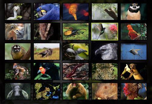 2013-11-25 22_19_30-Trombinoscope _ Amazonia